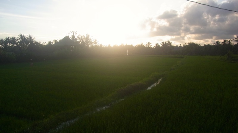 田んぼに沈んでいく夕日