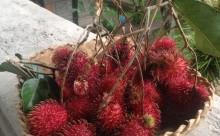 季節のフルーツ12月5日:ランブータン