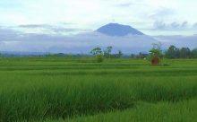 お誕生日のスワルさん@アグン山が見える田園